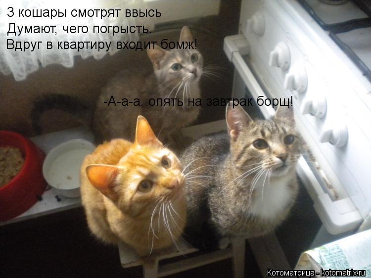 Котоматрица: 3 кошары смотрят ввысь Думают, чего погрысть. Вдруг в квартиру входит бомж! -А-а-а, опять на завтрак борщ!
