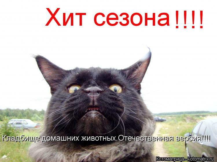 Котоматрица: Хит сезона !!!! Кладбище домашних животных.Отечественная версия!!!!