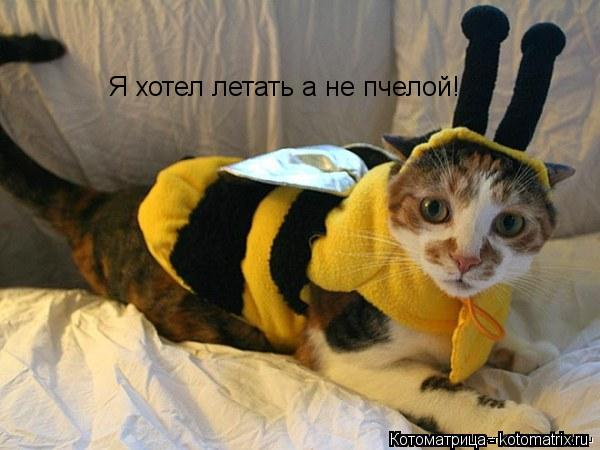 Котоматрица: Я хотел летать а не пчелой!