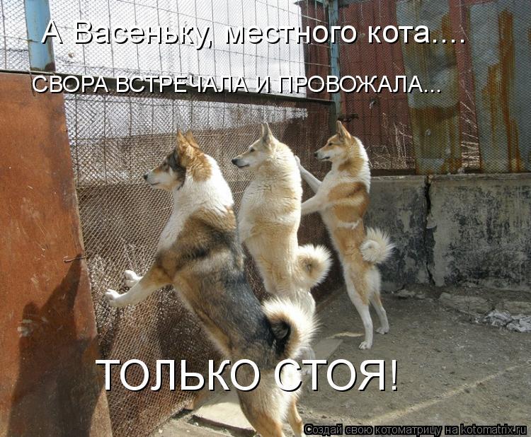 Котоматрица: ТОЛЬКО СТОЯ! А Васеньку, местного кота.... СВОРА ВСТРЕЧАЛА И ПРОВОЖАЛА...
