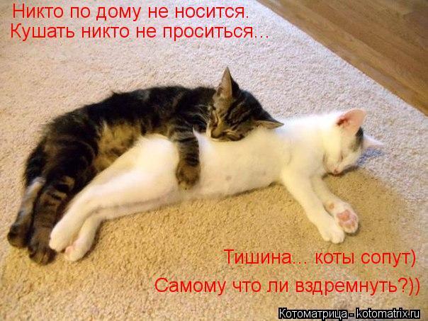 Котоматрица: Никто по дому не носится. Кушать никто не проситься... Тишина... коты сопут) Самому что ли вздремнуть?))