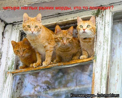 Котоматрица: четыре наглых рыжих морды, кто то поспорит?