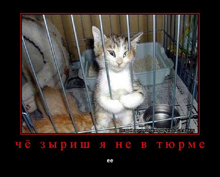 Котоматрица: чё зыриш я не в тюрме ее