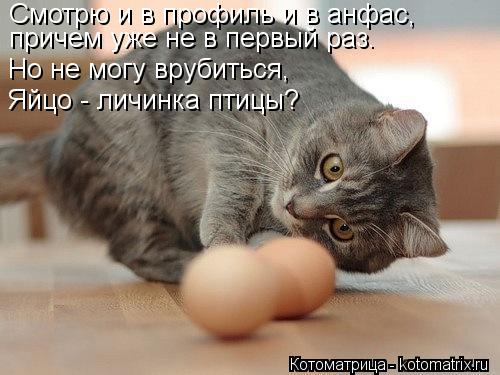 Котоматрица: Смотрю и в профиль и в анфас,   причем уже не в первый раз.  Но не могу врубиться,  Яйцо - личинка птицы?