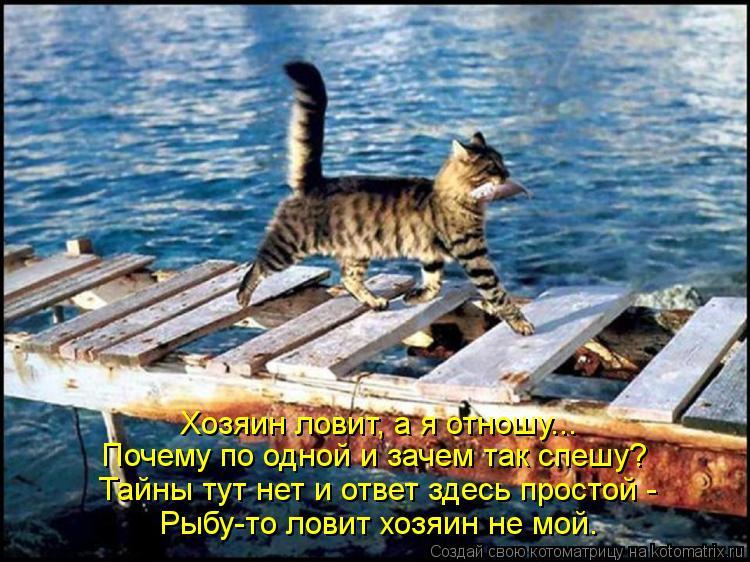 Котоматрица: Тайны тут нет и ответ здесь простой - Почему по одной и зачем так спешу? Хозяин ловит, а я отношу... Рыбу-то ловит хозяин не мой.