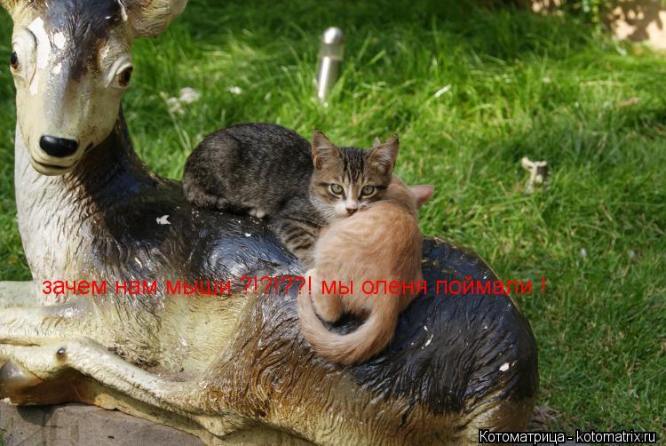 Котоматрица: зачем нам мыши ?!?!??! мы оленя поймали !