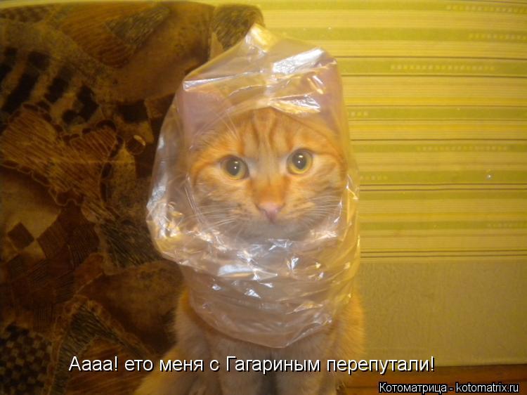 Котоматрица: Аааа! ето меня с Гагариным перепутали!
