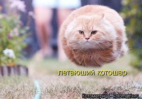 Котоматрица: летаюший котошар