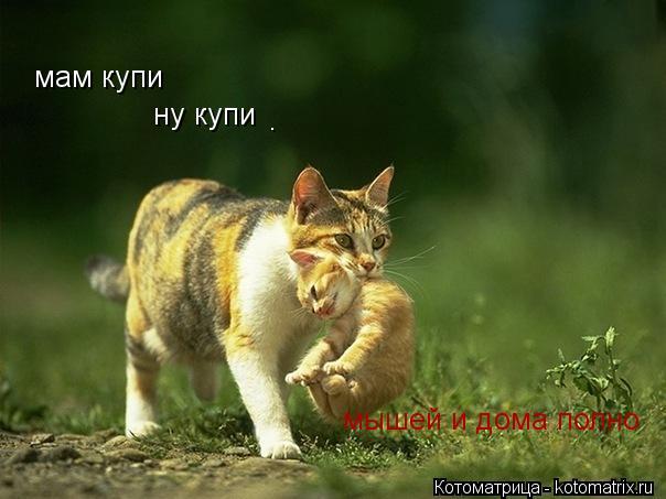 Котоматрица: мам купи ну купи мышей и дома полно .