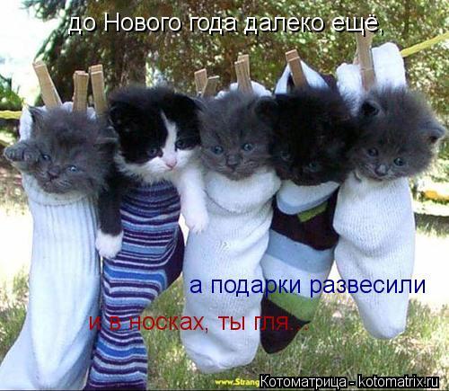 Котоматрица: до Нового года далеко ещё,  а подарки развесили и в носках, ты гля...