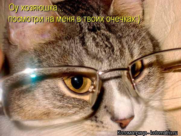 Котоматрица: Оу хозяюшка... посмотри на меня в твоих очечках:)