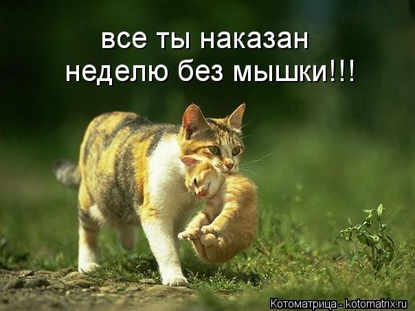 Котоматрица: все ты наказан неделю без мышки!!!