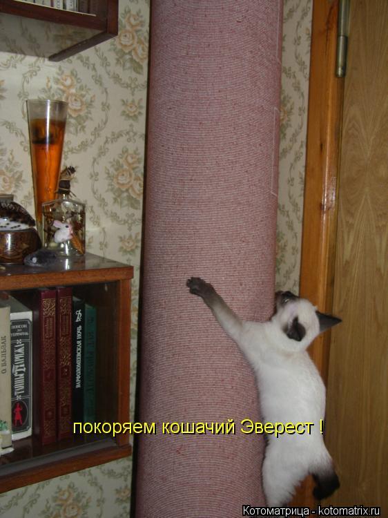 Котоматрица: покоряем кошачий Эверест !