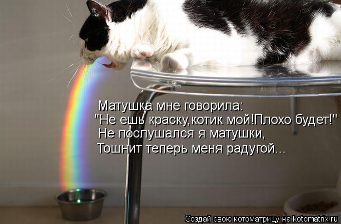 """Котоматрица: Матушка мне говорила: """"Не ешь краску,котик мой!Плохо будет!"""" Не послушался я матушки, Тошнит теперь меня радугой..."""