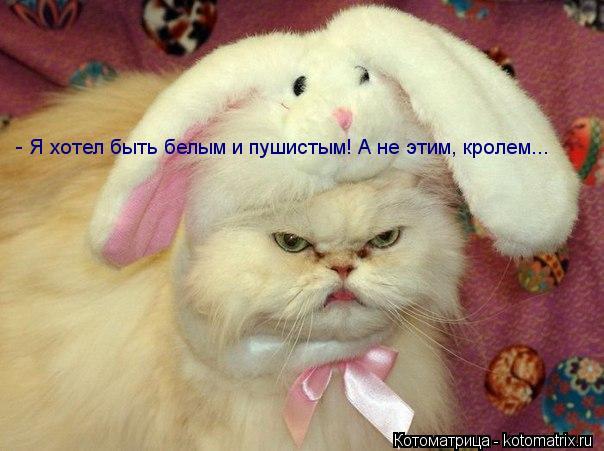 Котоматрица: - Я хотел быть белым и пушистым! А не этим, кролем...