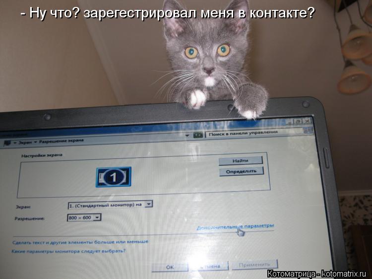 Котоматрица: - Ну что? зарегестрировал меня в контакте?