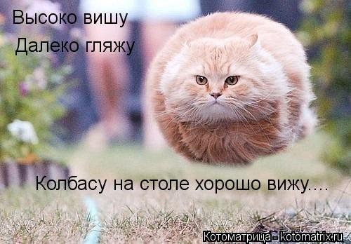 Котоматрица: Высоко вишу Далеко гляжу Колбасу на столе хорошо вижу....