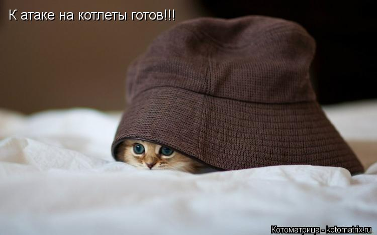Котоматрица: К атаке на котлеты готов!!!
