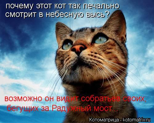 Котоматрица: почему этот кот так печально смотрит в небесную высь? возможно он видит собратьев своих, бегущих за Радужный мост...