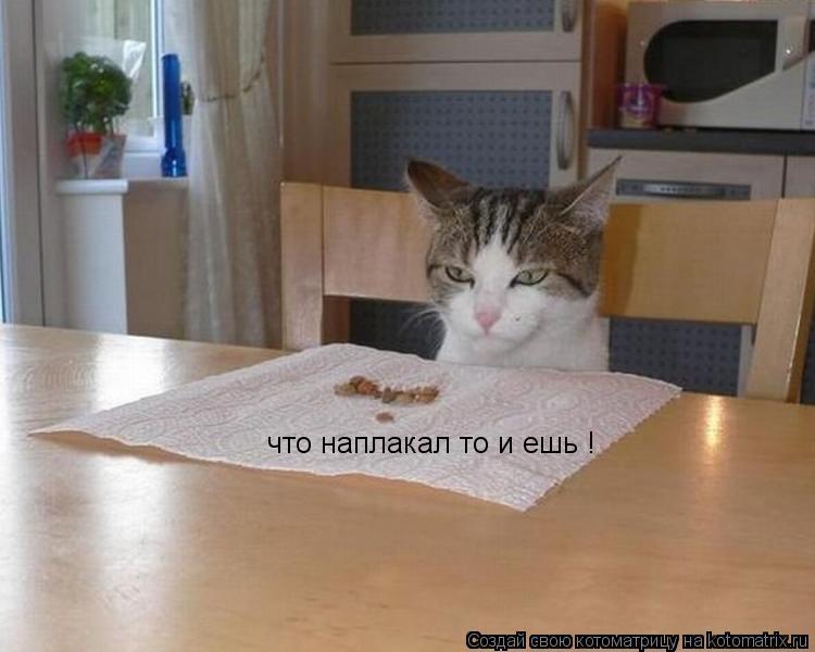 Котоматрица: что наплакал то и ешь !