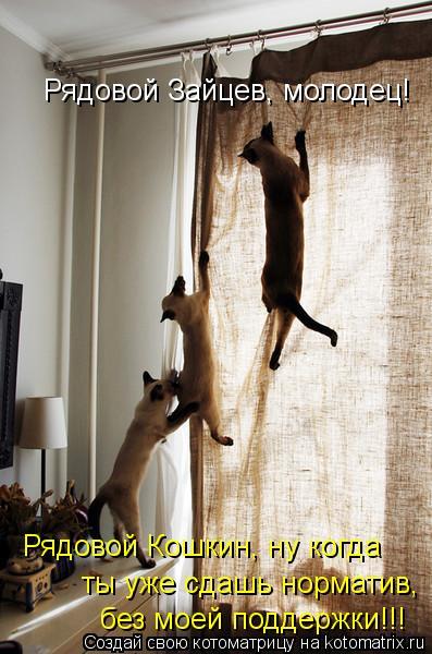 Котоматрица: Рядовой Зайцев, молодец! Рядовой Кошкин, ну когда ты уже сдашь норматив, без моей поддержки!!!