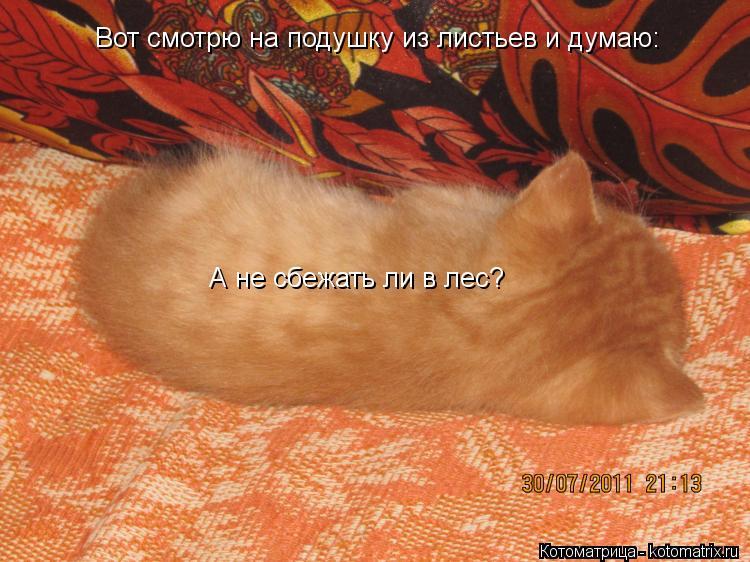 Котоматрица: Вот смотрю на подушку из листьев и думаю: А не сбежать ли в лес?