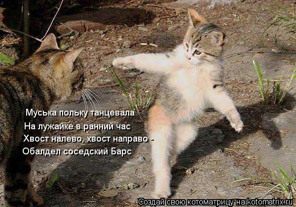 Котоматрица: Муська польку танцевала На лужайке в ранний час Хвост налево, хвост направо -  Обалдел соседский Барс