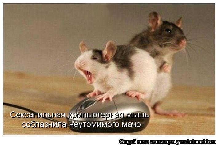 Котоматрица: Сексапильная компьютерная мышь соблазнила неутомимого мачо