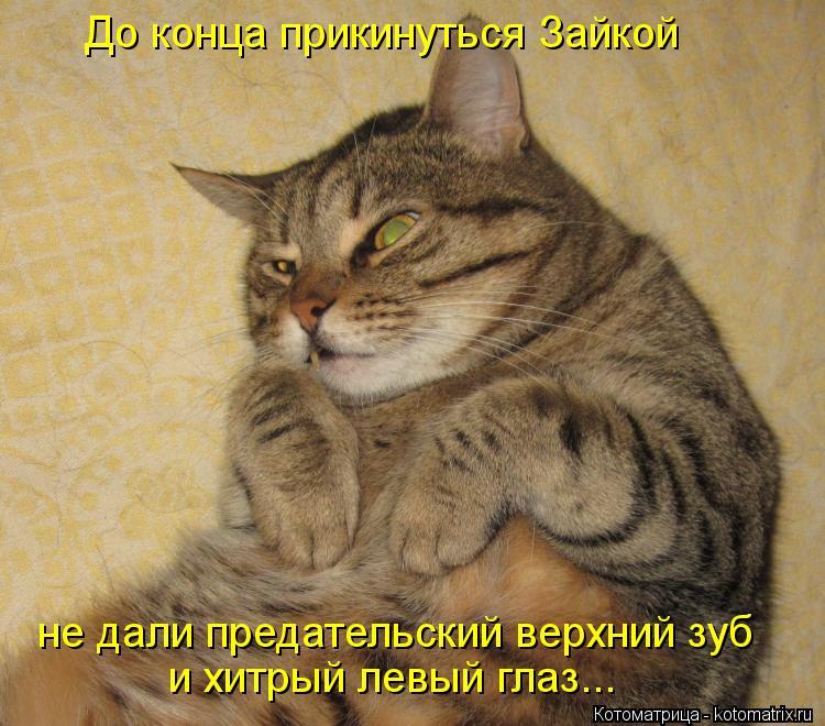 Котоматрица: До конца прикинуться Зайкой  не дали предательский верхний зуб и хитрый левый глаз...