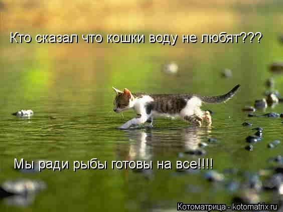 Котоматрица: Кто сказал что кошки воду не любят??? Мы ради рыбы готовы на все!!!!
