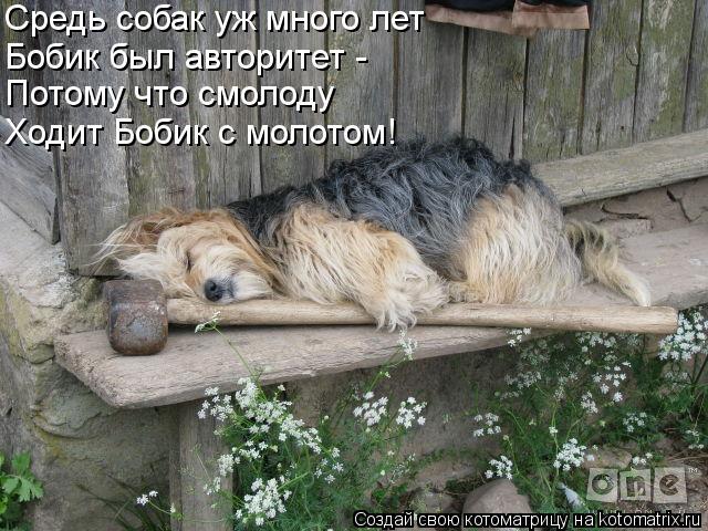 Котоматрица: Бобик был авторитет - Потому что смолоду Ходит Бобик с молотом! Средь собак уж много лет