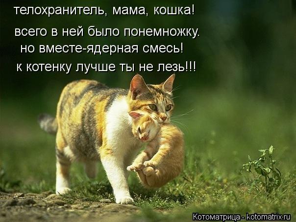 Котоматрица: телохранитель, мама, кошка! всего в ней было понемножку. но вместе-ядерная смесь! к котенку лучше ты не лезь!!!