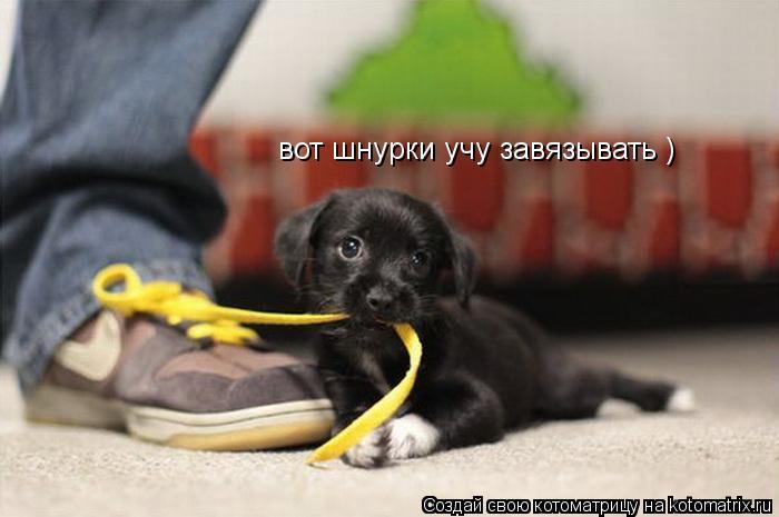 Котоматрица: вот шнурки учу завязывать )