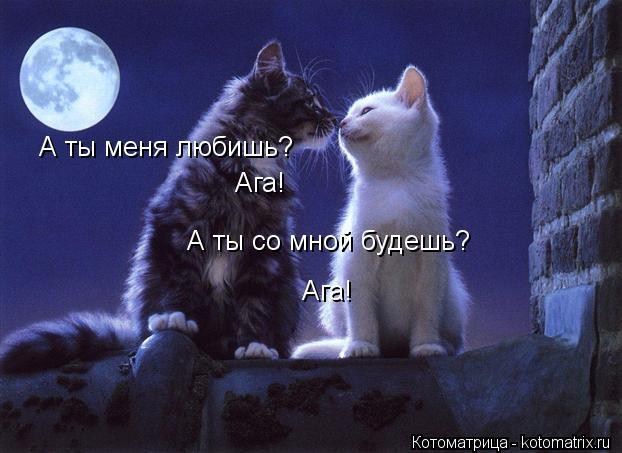 Котоматрица: А ты меня любишь? Ага! А ты со мной будешь? Ага!