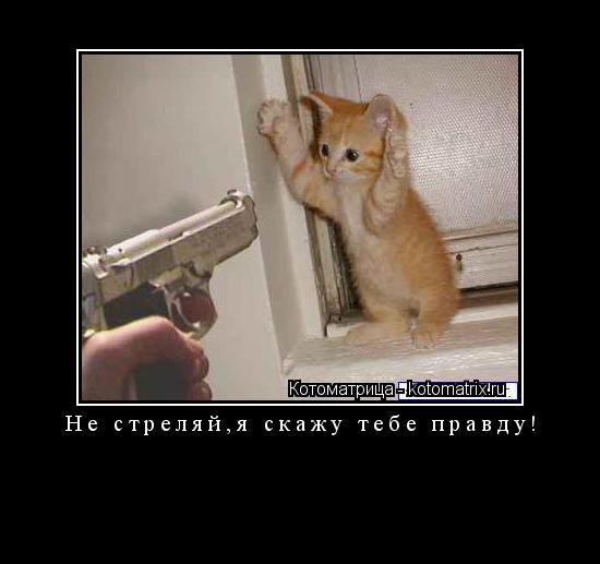 Котоматрица: Не стреляй,я скажу тебе правду!