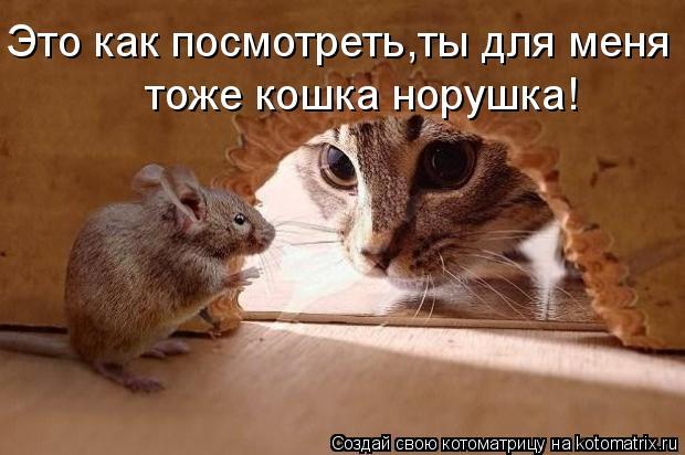 Котоматрица: Это как посмотреть,ты для меня тоже кошка норушка!