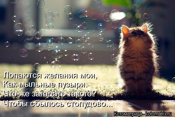 Котоматрица: Лопаются желания мои, Как мыльные пузыри. Что же загадать такого? Чтобы сбылось стопудово...