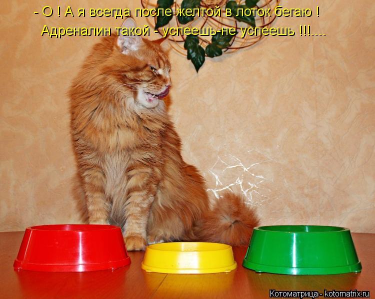 Котоматрица: - О ! А я всегда после желтой в лоток бегаю ! Адреналин такой - успеешь-не успеешь !!!....