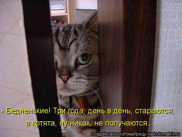Котоматрица: - Бедненькие! Три года, день в день, стараются, а котята, ну никак, не получаются...