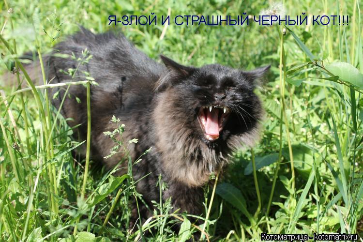 Котоматрица: Я-ЗЛОЙ И СТРАШНЫЙ ЧЕРНЫЙ КОТ!!!