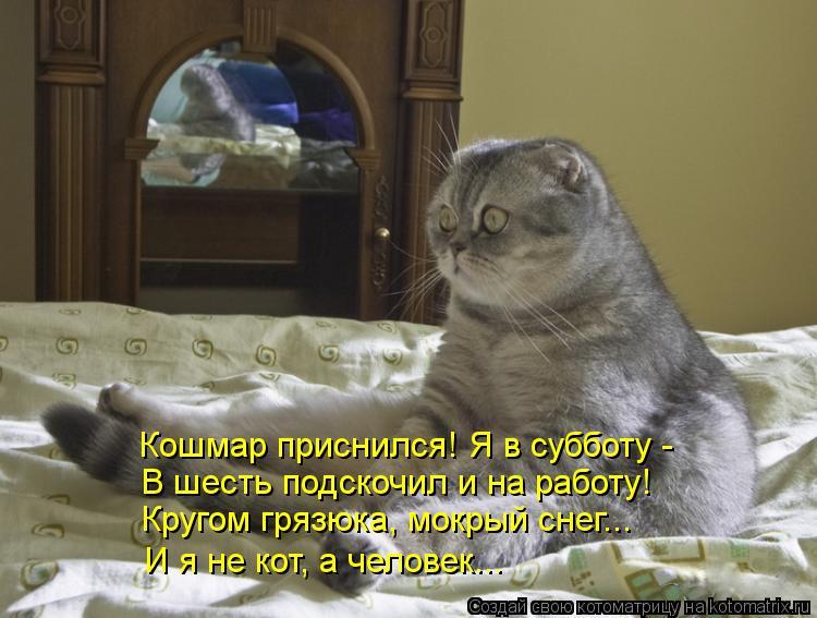 Котоматрица: Кошмар приснился! Я в субботу -  В шесть подскочил и на работу! Кругом грязюка, мокрый снег... И я не кот, а человек...