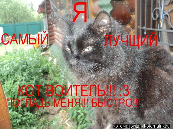 Котоматрица: Я  САМЫЙ ЛУЧЩИЙ КОТ ВОИТЕЛЬ!!! :3 ПОГЛАДЬ МЕНЯ!!! БЫСТРО!!!