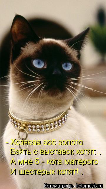 Котоматрица: - Хозяева всё золото Взять с выставок хотят... А мне б - кота матёрого И шестерых котят!..