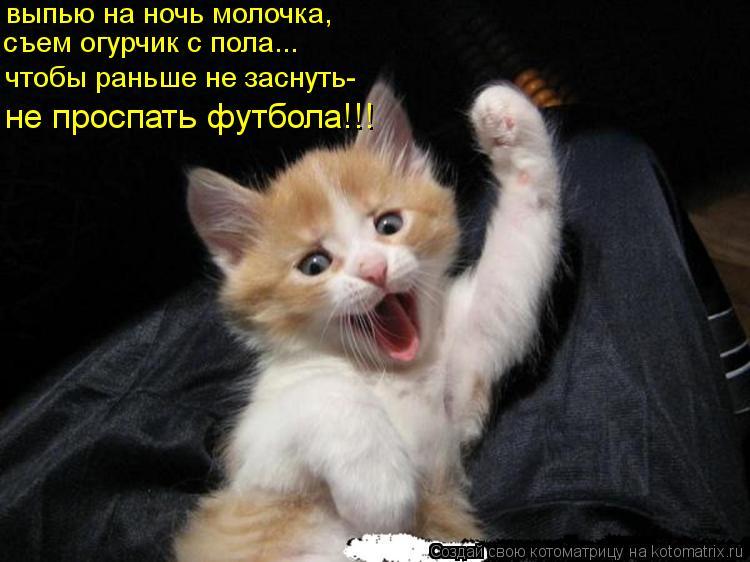 Котоматрица: выпью на ночь молочка, съем огурчик с пола... чтобы раньше не заснуть- не проспать футбола!!!