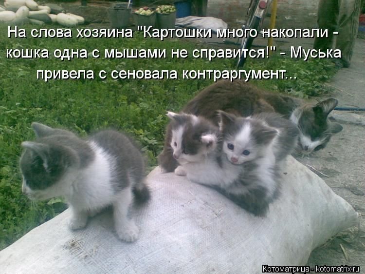 "Котоматрица: На слова хозяина ""Картошки много накопали - кошка одна с мышами не справится!"" - Муська привела с сеновала контраргумент..."