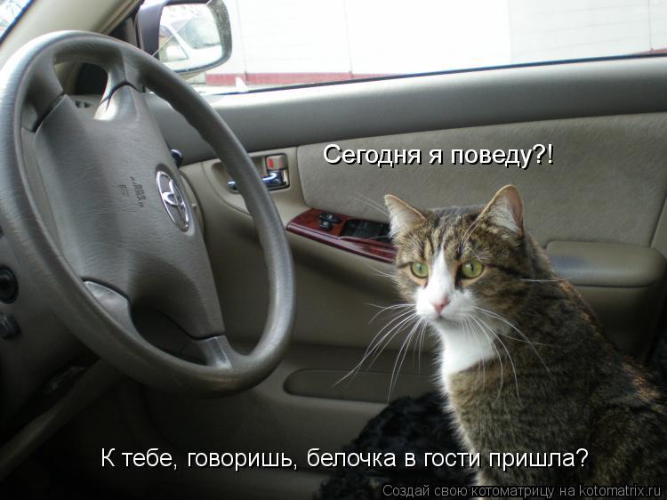 Котоматрица: К тебе, говоришь, белочка в гости пришла? Сегодня я поведу?!