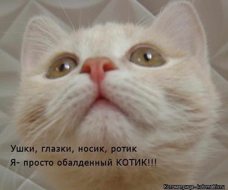 Котоматрица: Ушки, глазки, носик, ротик Я- просто обалденный КОТИК!!!