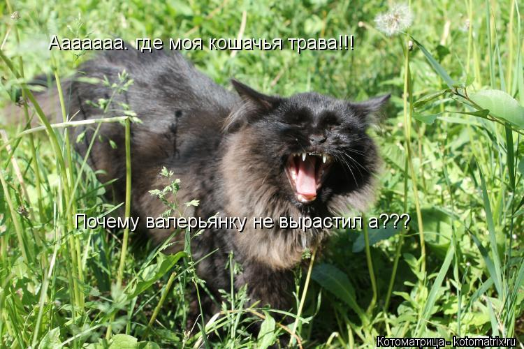 Котоматрица: Ааааааа. где моя кошачья трава!!! Почему валерьянку не вырастил а???