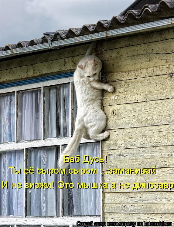 Котоматрица: Баб Дусь! Ты её сыром,сыром ...заманивай И не визжи! Это мышка,а не динозавр