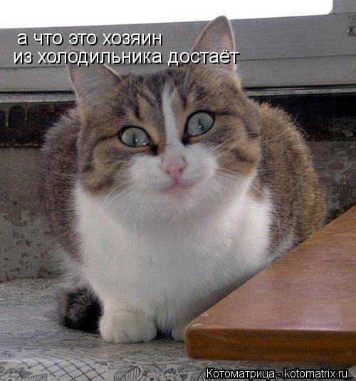Котоматрица: а что это хозяин  из холодильника достаёт
